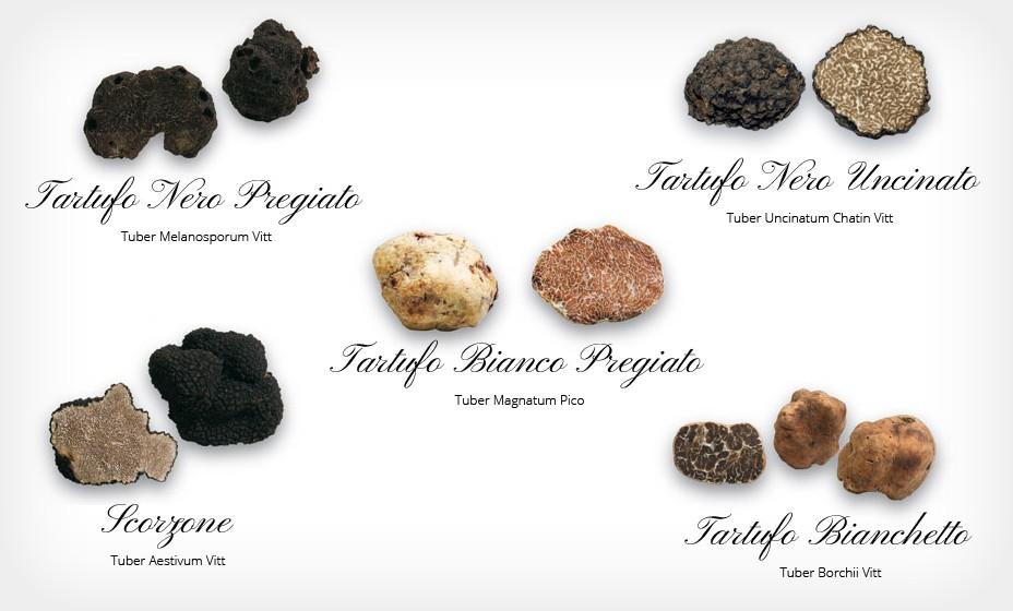 specie tartufi nel mondo