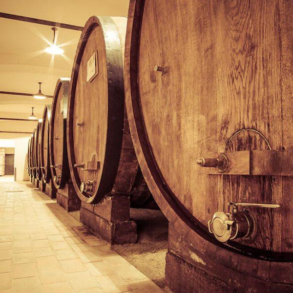degustazione vini langhe