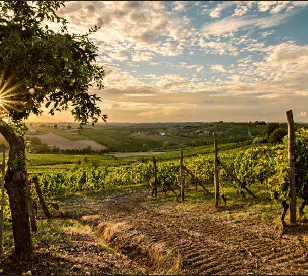 Degustazione vini nel Monferrato con visita in Cantina