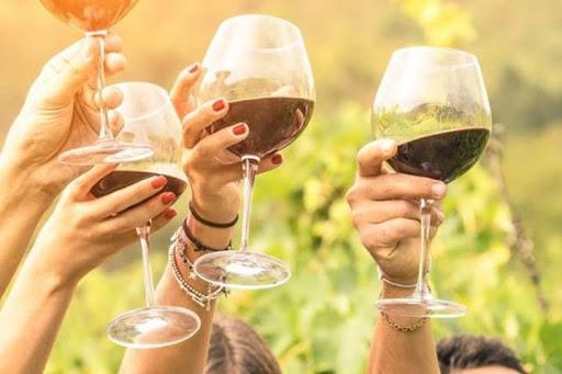 Degustazione vini in vigna