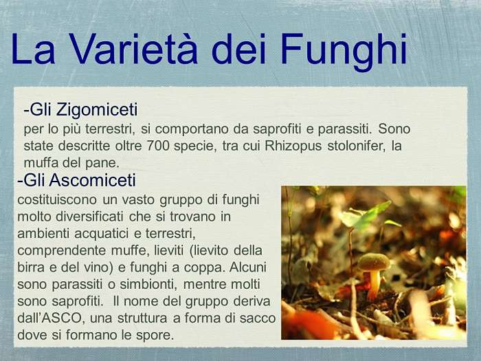 funghi categorie