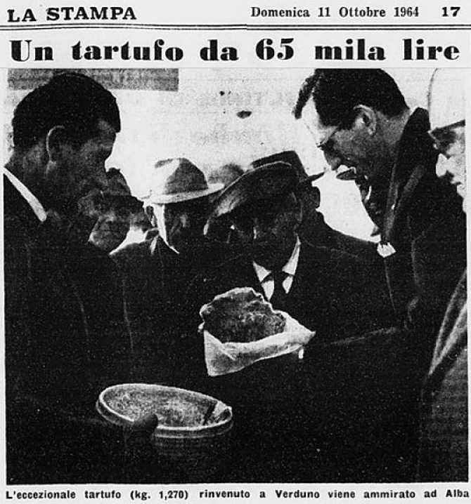 tartufo bianco 1964
